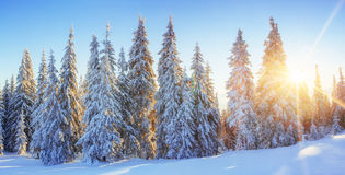 Mysterious winter landscape majestic mountains in  sunset. Stock Photo