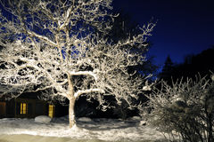 Mysterious winter night Royalty Free Stock Photo