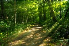 Mysterious Wooded Path. Wide, sun drenched, wooded path at Sarett Nature Center, Michigan Stock Image