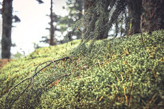 Mysterious woodland with moss and grass in vintage colors. Mysterious forest background with moss grass and twigs in vintage retro colors Stock Photo