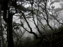 Mysterious woods on a foggy mountain hike