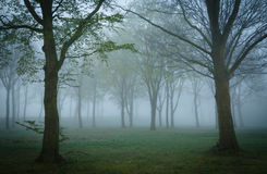 Mysterious woods Stock Photography