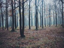 The mystery of the autumn Royalty Free Stock Images