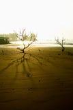 Mystery balding trees royalty free stock photography