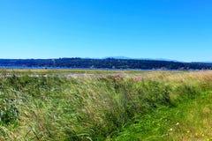 Mystery Bay, Marrowstone island. Olympic Peninsula. Washington State. Marsh land with sal water and northwest wild flowers Royalty Free Stock Photo