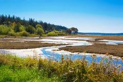 Mystery Bay, Marrowstone island. Olympic Peninsula. Washington State. Marsh land with sal water and northwest wild flowers Stock Photography