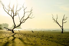 Mystery beach. Morning scenery at Tanjung Sepat, Malaysia Stock Images