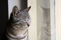 Mystery cat. Sleeping while her reflection in the mirror looking Stock Images