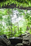 Mystery cave in tropical forest, lush fern, moss and lichen on the stone wall of the cave. Water splashes with tropical trees in. Front of ancient cave royalty free stock photography