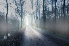 Mystery dark fog forest long road. Mystery dark fog forest road spooky horror style Stock Image