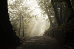 Mystery fog Stock Photos