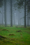 Mystery Fog in dark forest Stock Photo