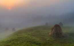 Mystery. Foggy sunrise in Carpathians.Fog,dew, and the silence around Royalty Free Stock Photography