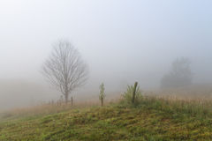 Mystery. Foggy sunrise in Carpathians.Fog,dew, and the silence around Stock Photo