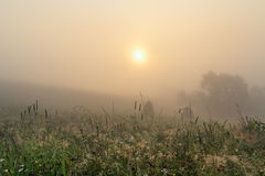 Mystery. Foggy sunrise in Carpathians.Fog,dew, and the silence around Royalty Free Stock Photo