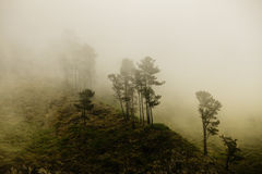 Mystery forest. (Fog in a Madeiran forest Royalty Free Stock Photography