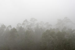 Mystery Forest. Conifer forest in fog day. North of Spain Stock Photo