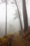 Mystery Forest in foggy weather Stock Images