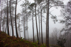Mystery Forest in foggy weather Royalty Free Stock Photos