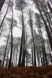 Mystery Forest in foggy weather Stock Image