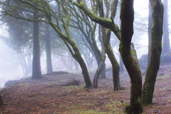 Mystery Forest Stock Images