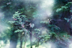 Mystery forest Royalty Free Stock Photography