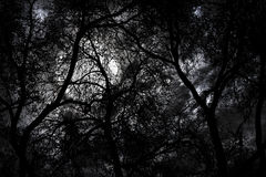 Mystery forest at night. Silhouette of mystery forest against dramatic sky at night Stock Photography