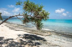 Mangrove Tree Reaching. MYSTERY ISLAND, VANUATU, PACIFIC ISLANDS-DECEMBER 2,2016: Mangrove tree branch reaching over rocky beach with tourist snorkelling in the Stock Photography