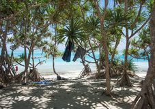 Mangrove Paradise at Mystery Island. MYSTERY ISLAND, VANUATU, PACIFIC ISLANDS-DECEMBER 2,2016: Tourists, Pacific Ocean waters, and mangrove forest at stunning Stock Photography