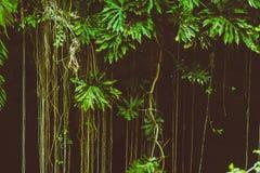 Mystery jungle royalty free stock photography