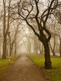 Mystery lane in the park Royalty Free Stock Photos