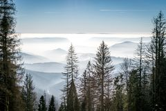 Mystery mountains in the winter. Just tops of trees Royalty Free Stock Photo