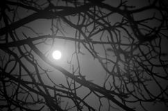 Mystery night background. With moon saw among branches Stock Image