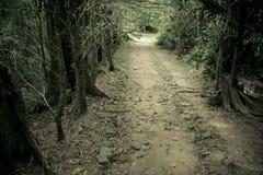 Mystery path throw the woods Stock Photos