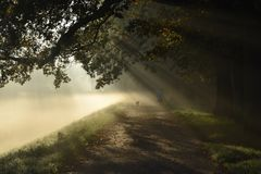 Mystery road, misty landscape, morning autumn park with sun rays Royalty Free Stock Image