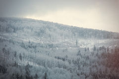 Mystery snow forest Royalty Free Stock Images