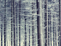 Mystery snow forest Stock Photography