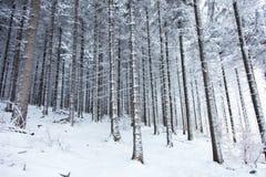 Mystery snow forest Stock Photos
