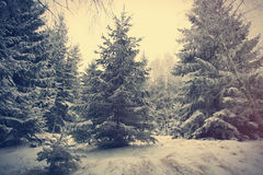 Mystery snow forest Royalty Free Stock Photos