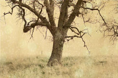 The mystery tree. An old oak tree in a textured background Stock Photo