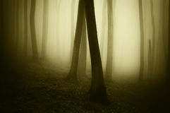 Mysteryous spooky forest with fog Royalty Free Stock Image
