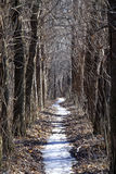Mystic Alley in dry forest. Alley with snow-covered path in the mystic dry forest Royalty Free Stock Photography
