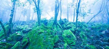 Mystic ancient tropical forest in blue misty, fantastic green moss and lichen in the rocks and branches of wild trees stock images