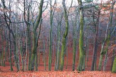 Mystic autumn forest Stock Photos
