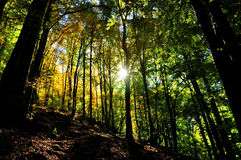 Mystic autumn forest with sun rays Stock Photo