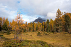 Mystic autumn landscape with yellow larch on a background of clo. Udy Tre Cime mountains in the Dolomites. The Italian Alps Stock Photo