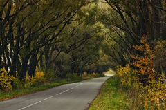 The mystic autumn trees along road Stock Image