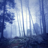 Mystic blue color fantasy forest Royalty Free Stock Photography