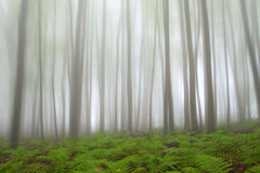 Mystic forest with fern Royalty Free Stock Photo