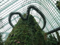 Mystic Cloud Forest Stock Photo